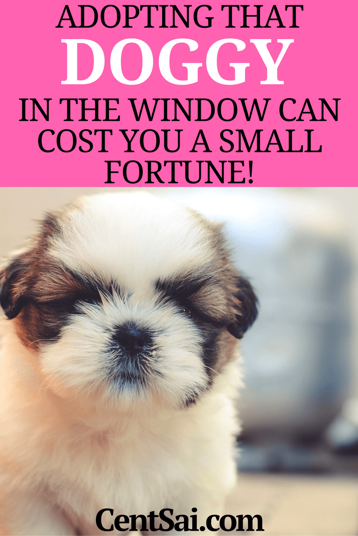 Adopting That Doggy In The Window Can Cost You A Small Fortune! We decided we wouldn't buy a puppy from a pet store and spend hundreds or thousands of dollars. Instead, we would adopt a dog from a rescue shelter or from animal control.
