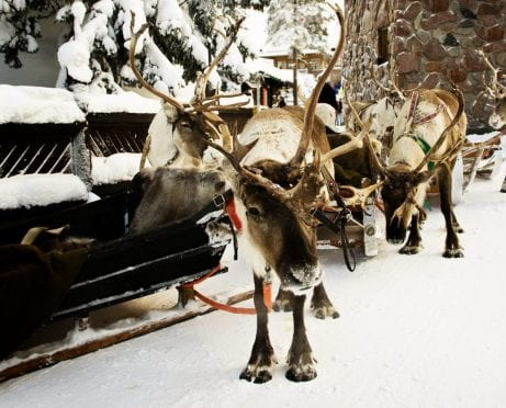I Got Run Over By a Reindeer — and Workers' Comp Saved the Day!