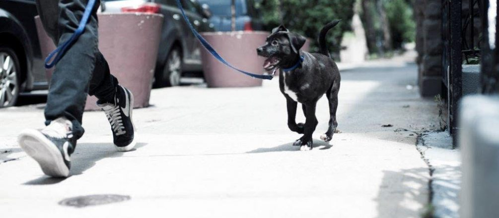 Side Hustles for Pet Lovers: How to Become a Dog Walker
