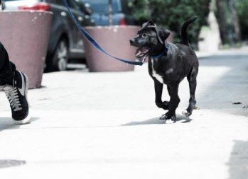 How to Become a Dog Walker | 4 Dog Walking Tips | CentSai