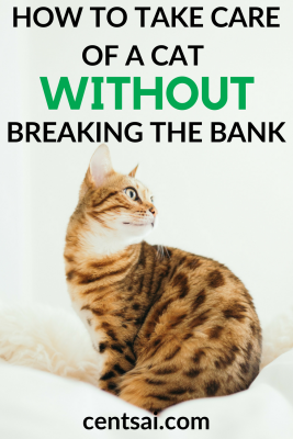 How to Take Care of a Cat Without Breaking the Bank. Your fur baby deserves to be happy, right? So if you're on a tight budget, what can you do? Learn how to take care of a cat without hurting your wallet. #howtotakecareofacat #frugalliving #frugaltips #petcare #lifestyle