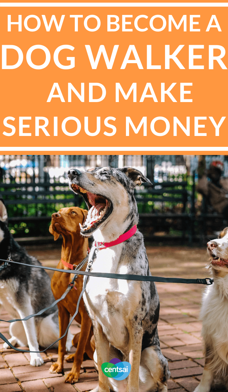 How to Become a #DogWalker and Make Serious Money. Have you ever wondered how to become a dog walker? The process (and the income) may surprise you. Check out our #dogwalkingtips #makemoremoney #sidehustle #makeextramoney