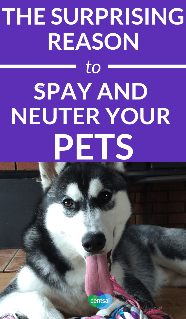 The Surprising Reason To Spay and Neuter Your Pets. It may seem cheaper to forget about getting your furbaby fixed, but you'll regret it. Learn why you should spay and neuter your pets. #pets